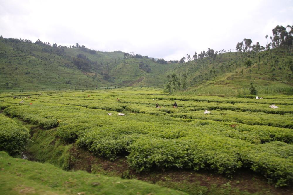 Online-dating-sites in ruanda